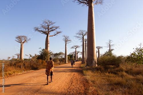 In de dag Baobab baobab