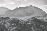 Krajobraz czarno-białe tło - 133780046