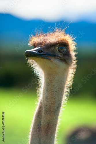 Photo Stands Ostrich Ostrich head