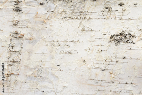 Obraz na plátně Birch tree bark background