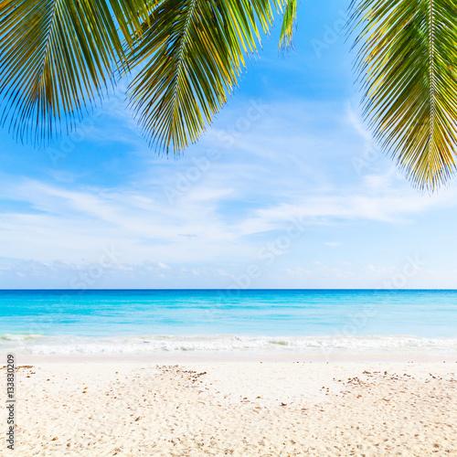 Foto op Plexiglas Caraïben Tropical beach background, sand, palms