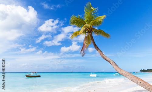 Cadres-photo bureau Caraibes Coconut palm grows on white sandy beach