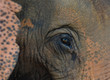 Dem Elefant ganz nah, Thailand