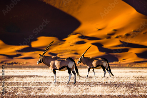 In de dag Antilope Oryx and dunes - Sossusvlei - Namibia