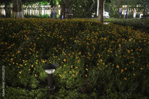 Fototapeta Small Garden Lamp on surrounded yellow daisy flowers obraz na płótnie