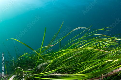 Plakat Kolorowa rafa zimnowodna z zielonymi algami
