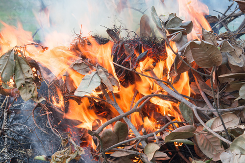 Fire leaves Fototapet