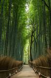 Fototapeta Bamboo - Bamboo forest, Japan