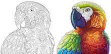 Collection Of Two Stylized Macaw (ara) Parrots. Monochrome And Colored Versions. Freehand Sketch For Adult Anti Stress Coloring Book Page With Doodle And Zentangle Elements.
