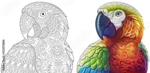 Naklejka premium Kolekcja dwóch stylizowanych papug ara (ara). Wersje monochromatyczne i kolorowe. Odręczny szkic dla dorosłych książki antystresowej z elementami doodle i zentangle.