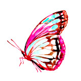 Fototapeta Motyle - butterfly,watercolor,on a white