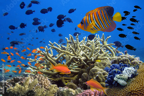 Poster Sous-marin Coral Reef and Tropical Fish in the Red Sea