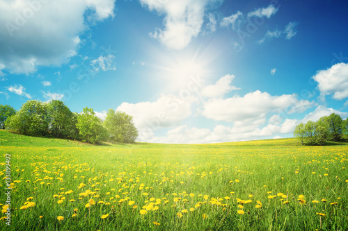 Ingelijste posters Platteland Field with dandelions and blue sky