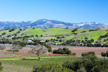 Santa Barbara Wine Area