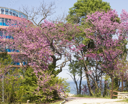 Photo Spring in Saints Constantine and Helena resort