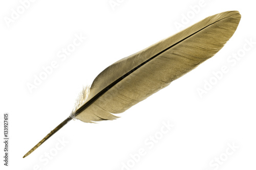 Single bird feather in brown isolated on a white background