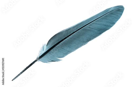 Single bird feather in turquoise isolated on a white background