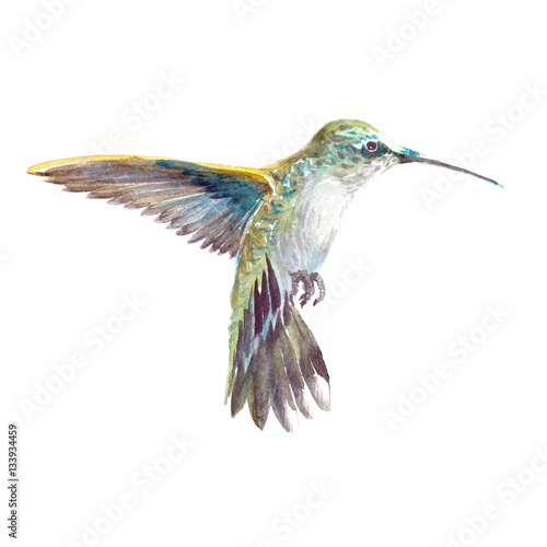 Photo  Watercolor realistic hummingbird, colibri tropical bird animal isolated on a white background illustration