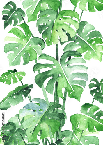 Cadres-photo bureau Aquarelle la Nature Monstera leaves background. Beautiful watercolor pattern made of tropical plant leaves. Ideal for prints, decoration and interior. Isolated on white