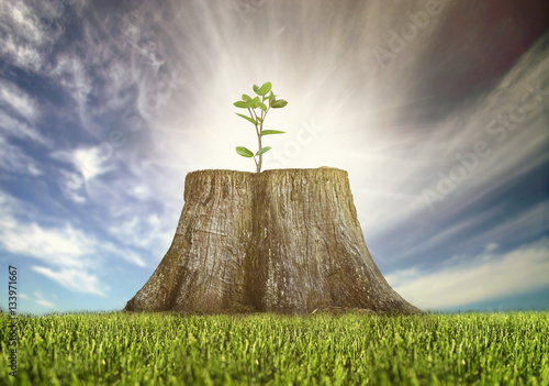 renewal, young tree growing on a tree stump Poster
