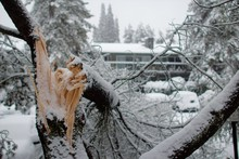 Broken Branch After Snow Storm