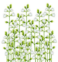 Panel Szklanybranch of jasmine flowers isolated on white background
