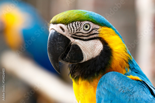 Parrot sitting and watching you