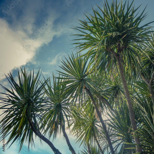 Palm Trees Against Sky