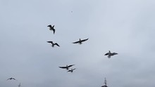 Group Of Seagull Catch The Bre...