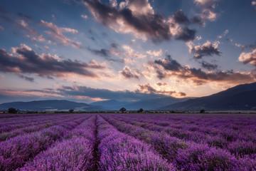 Fototapeta Popularne Lavender fields. Beautiful image of lavender field. Summer sunset landscape, contrasting colors. Dark clouds, dramatic sunset.