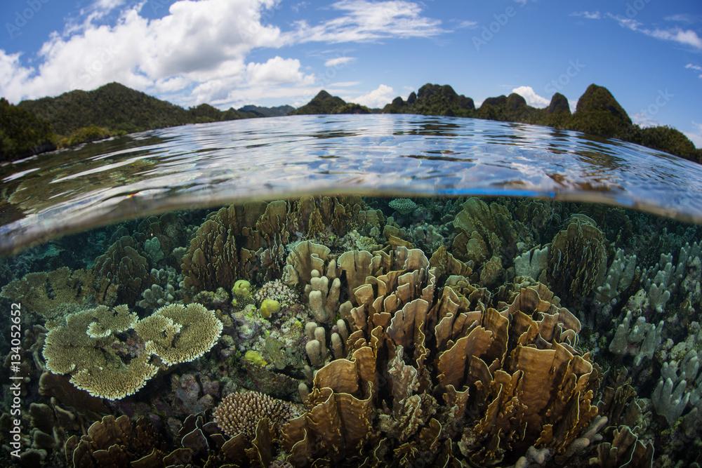 Fototapeta Healthy Corals and Beautiful Islands in Wayag, Raja Ampat