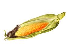 Watercolor Indian Corn