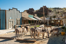 Burros (Donkeys) In Oatman Chost Town In Arizona