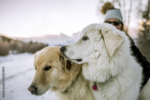 Close-up of dogs with woman on snowy field against sky Poster