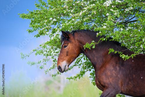 piekni-podpalanego-konia-jablka-stoi-pod-kwitnacym-drzewem-na-tle-burzowy-niebo-na-wiosne-portret-brown-klacz-z-kwiatami-w-profilu