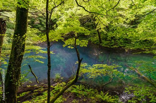 Fototapeta japanese landscape - shirakami - juuniko - wakutsubo no ike - aomori