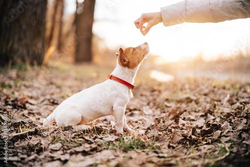 Fotografie, Obraz  dog training