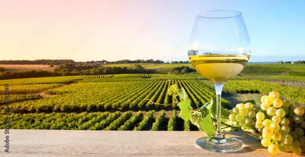 Fototapeta Vin blanc sur fond de vigne en France