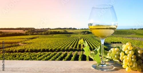 In de dag Wijn Vin blanc sur fond de vigne en France