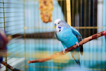 Home Wavy Parrot With Blue Plu...