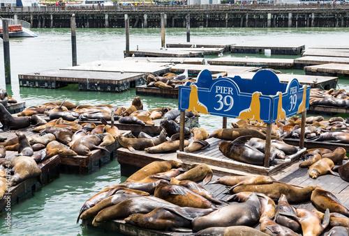 Poster  Seals at Pier 39 in San Francisco