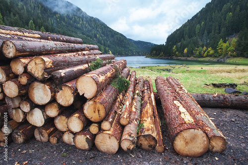 Fotografie, Obraz  Wooden logs in the forest, stacked in a pile in Dolomites.