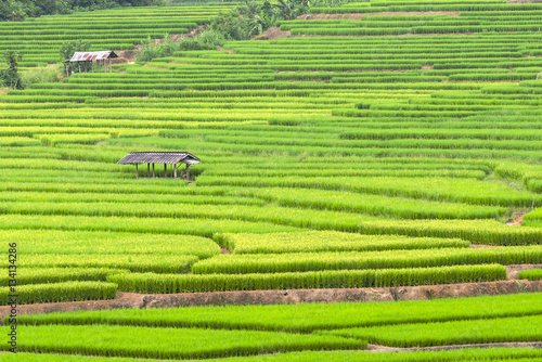 Fotobehang Rijstvelden GreenTerraced rice fields in northern Thailand