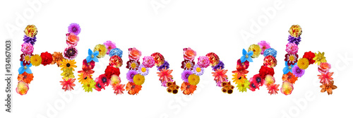 Flower Name Hannah Poster