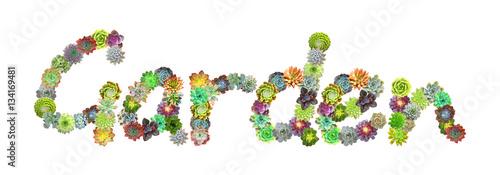 Photo  Garden Succulent Word