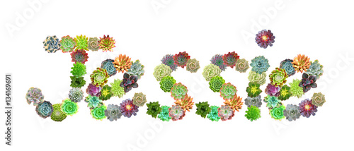 Jessie Succulent Name Wallpaper Mural