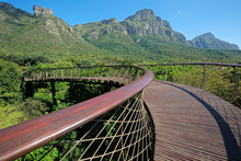 Elevated Walkway In The Kirstenbosch Botanical Gardens, Cape Town, South Africa.