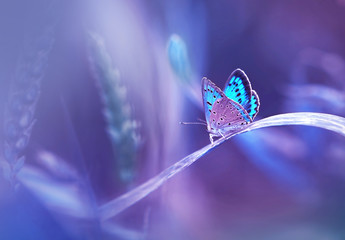 Beautiful blue butterfly on blade of grass in nature with a soft focus on blurred purple background beautiful bokeh. Magic dreamy artistic image for wallpaper template background design card.