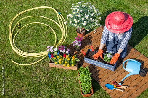 Woman sitting on the lawn, wearing gloves, straw hat potting flowers ...