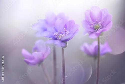 Obraz Delikatny obraz artystyczny w kwiatami - fototapety do salonu
